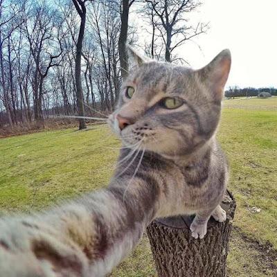 Foto Kucing Yang Gemar Selfie 05