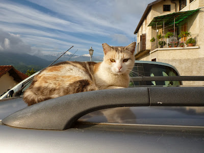 A Cat on a Car on the Way to Villavecchia