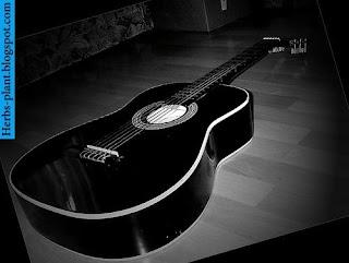 صور جيتار اسود 2013