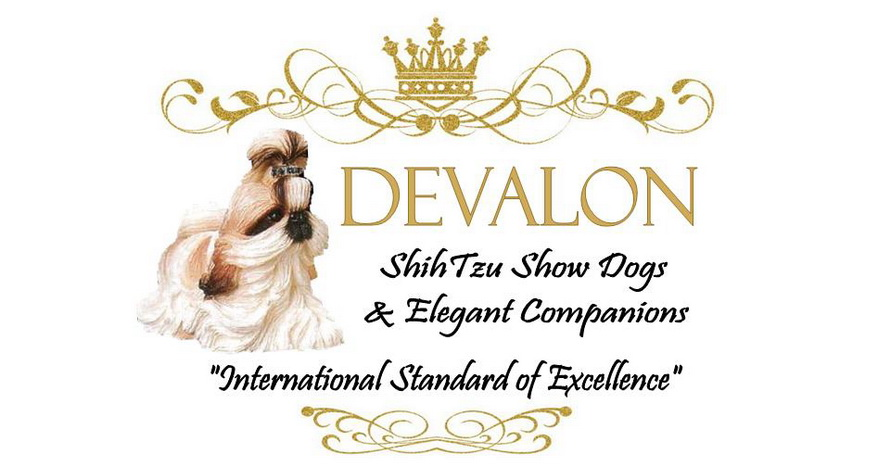 Devalon Shih Tzu | Breeders Puppies for Sale Florida