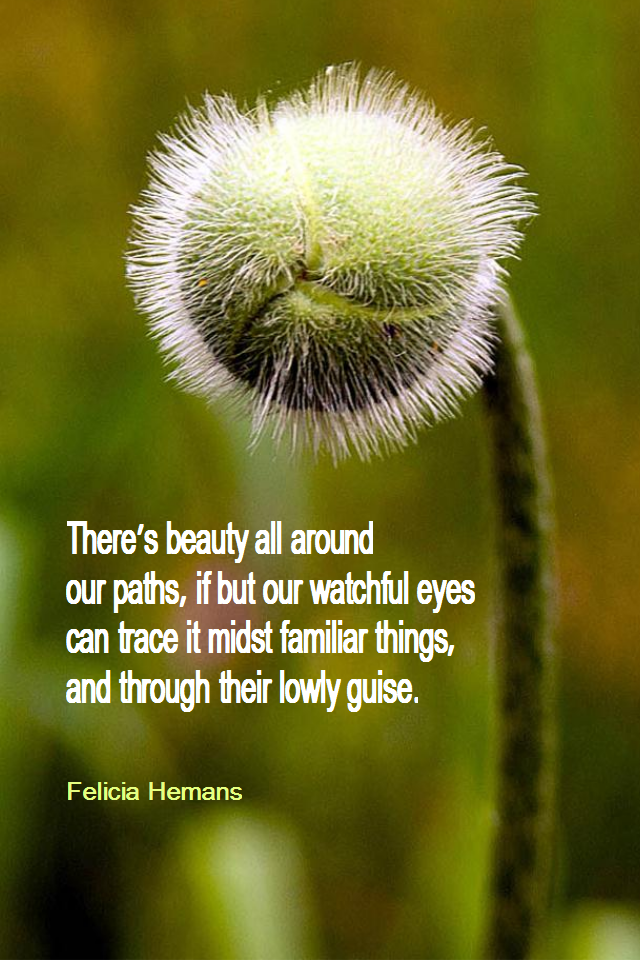 visual quote - image quotation for BEAUTY - There's beauty all around our paths, if but our watchful eyes can trace it midst familiar things, and through their lowly guise. - Felicia Hemans