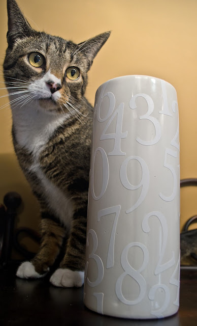 Cat Assistant DIY Vase