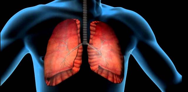 Fisiologia del aparato respiratorio y biologia