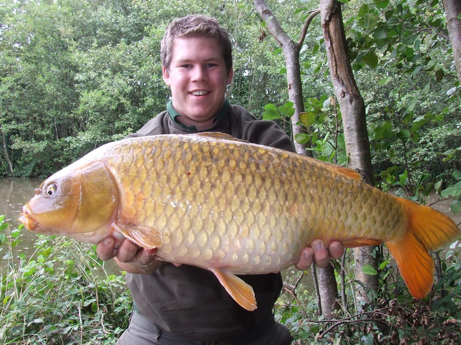 Resep Umpan Ikan Mas Besar Terbaik Dan Jitu ~ Resep Umpan