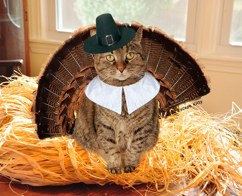 Happy Thanksgiving From Escape Kitty