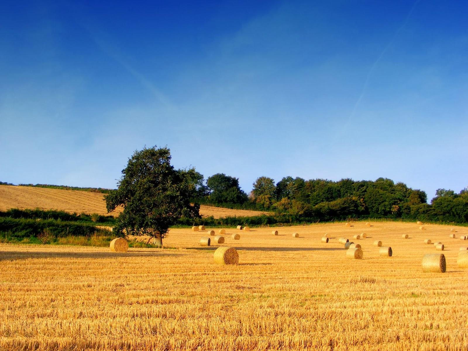 Il meraviglioso poema temporale del duca dei tempi for Piani di fattoria del granaio