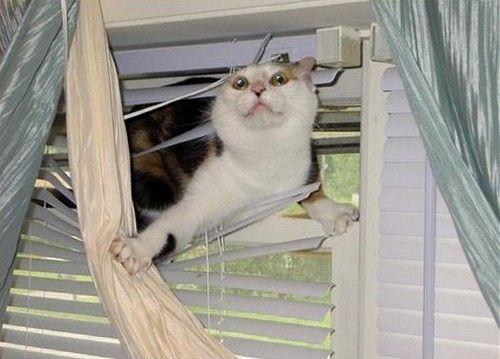 Best Kat In De Gordijnen Images - Huis & Interieur Ideeën ...