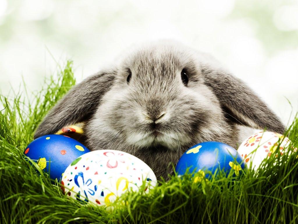 Uskrsna jaja i zec u travi