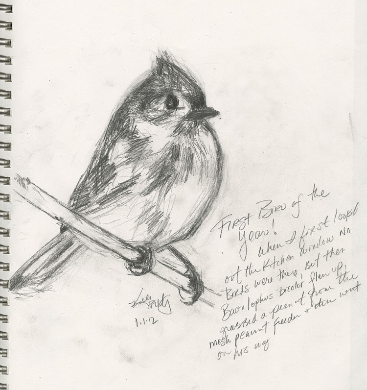 a pencil sketch of a Tufted Titmouse (Baeolphus bicolor) from my sketchbook