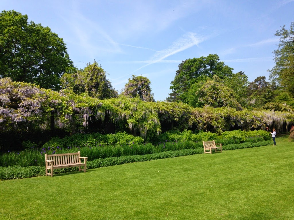 Nymans wisteria