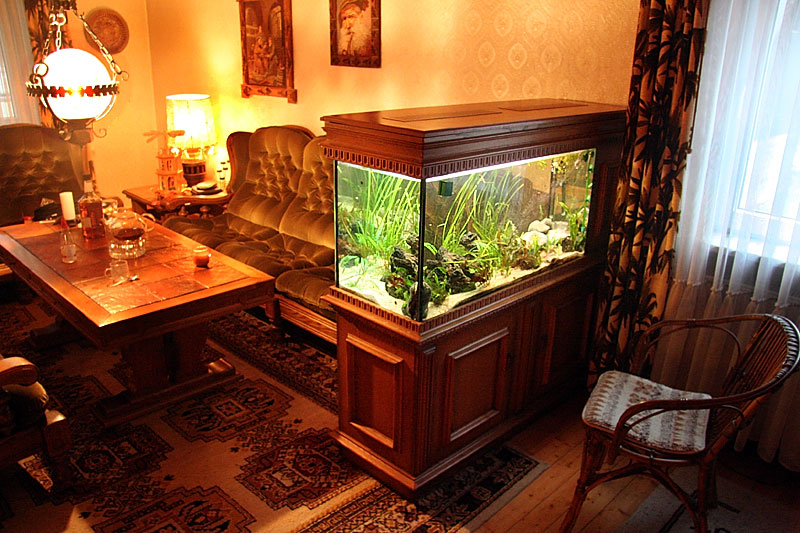 Florida disneyland pictures of fish tanks decorated - Decorative fish tanks for living rooms ...