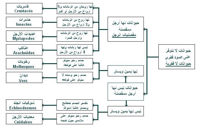 أسماء الأدوية واستخداماتها باللغة العربية pdf