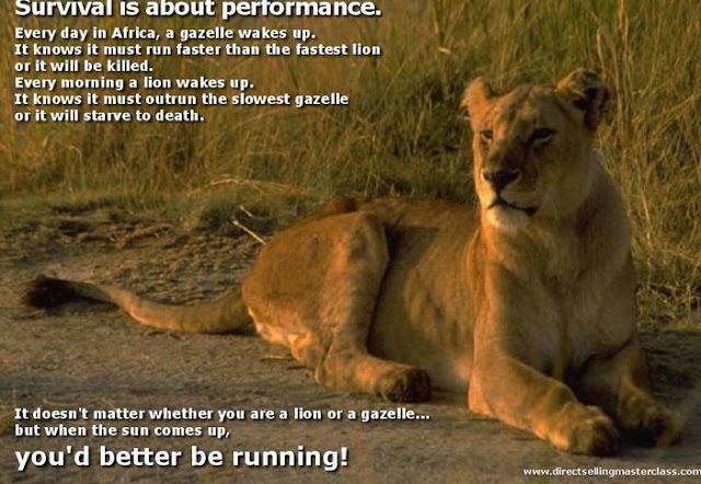 Supravietuire: Fie ca esti leu sau gazela