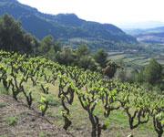 Tokaj Wine Region Historic Cultural Landscape