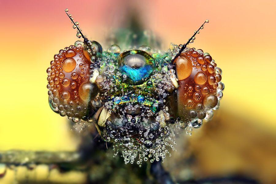 Fotografias macro capturam o efeito da água no mundo dos insetos