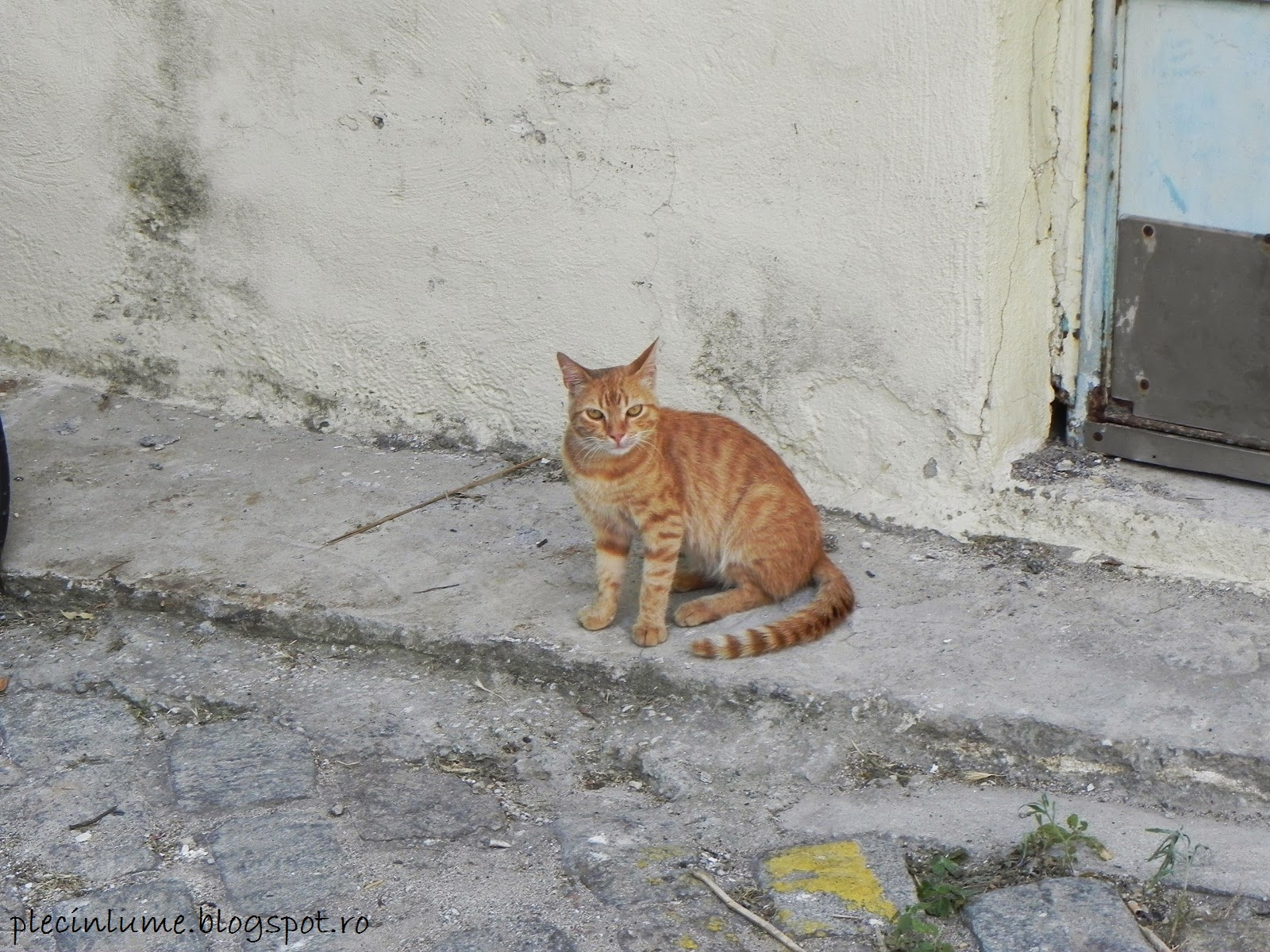 Greek cats (Pisicile din Thassos)