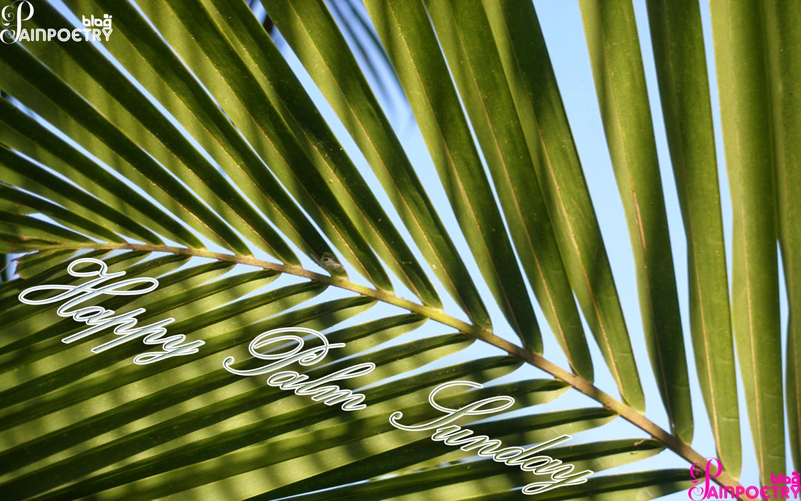 Palm-Sunday-Wallpaper-Image-Hd-Wide