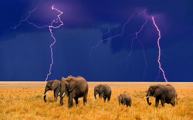 elephants, lightenings, wallpapers, nature, desktop, HD, HQ, tapandaola111