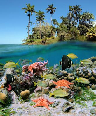 Vista del fondo marino en un exótico paisaje tropical con arrecifes, corales y peces de colores.