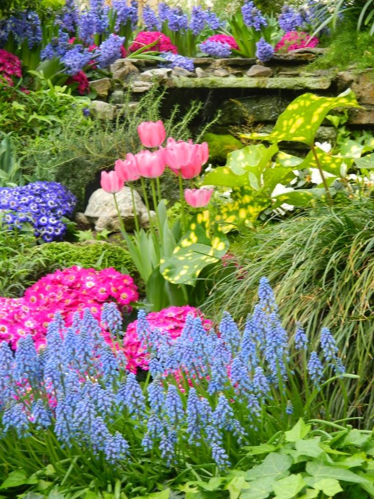 Pale blue grape hyacinth Muscari armeniacum Florist's cineraria Allan Gardens Conservatory Spring Flower Show 2014