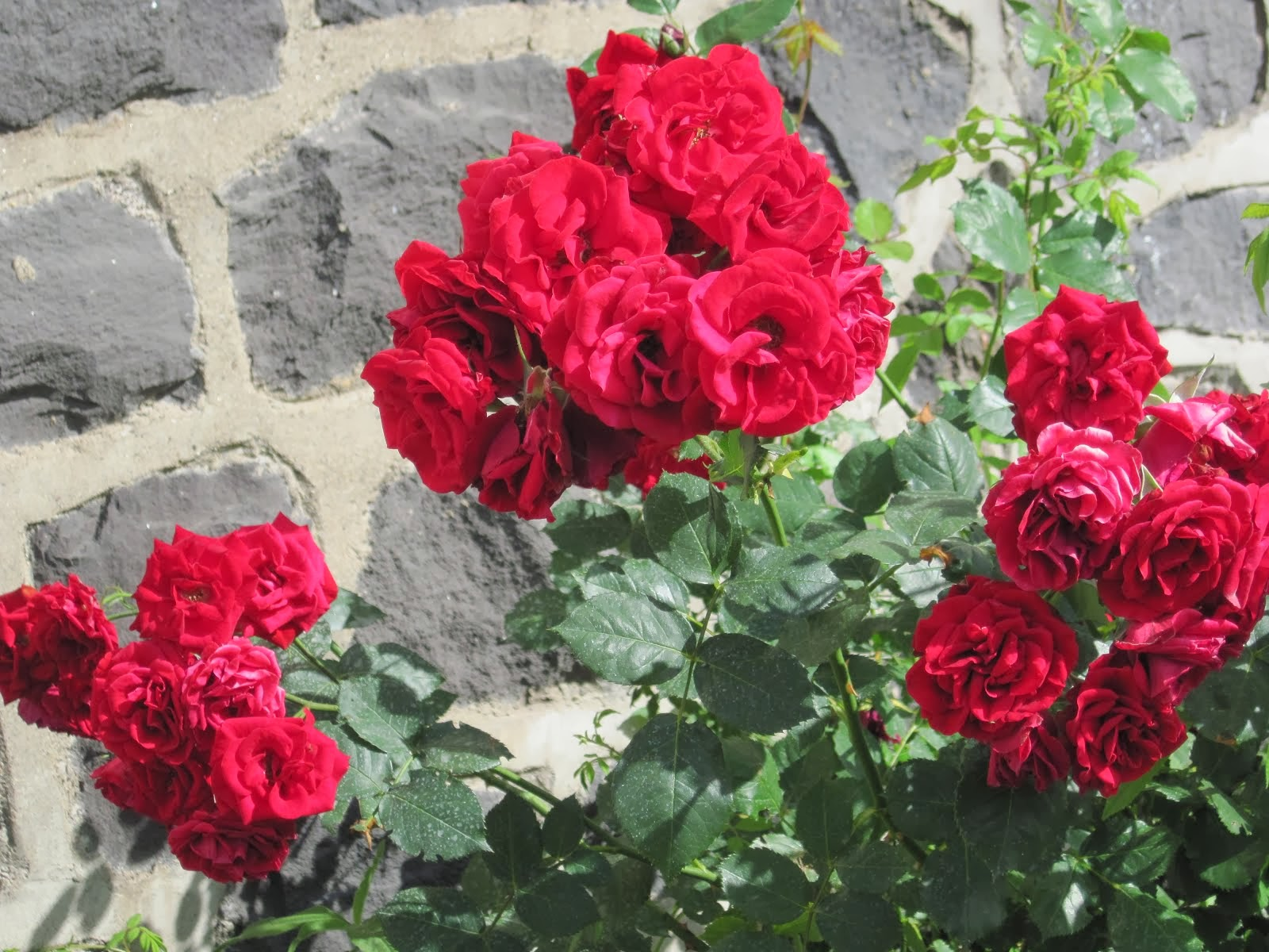 Les fleurs favorites de Quinou