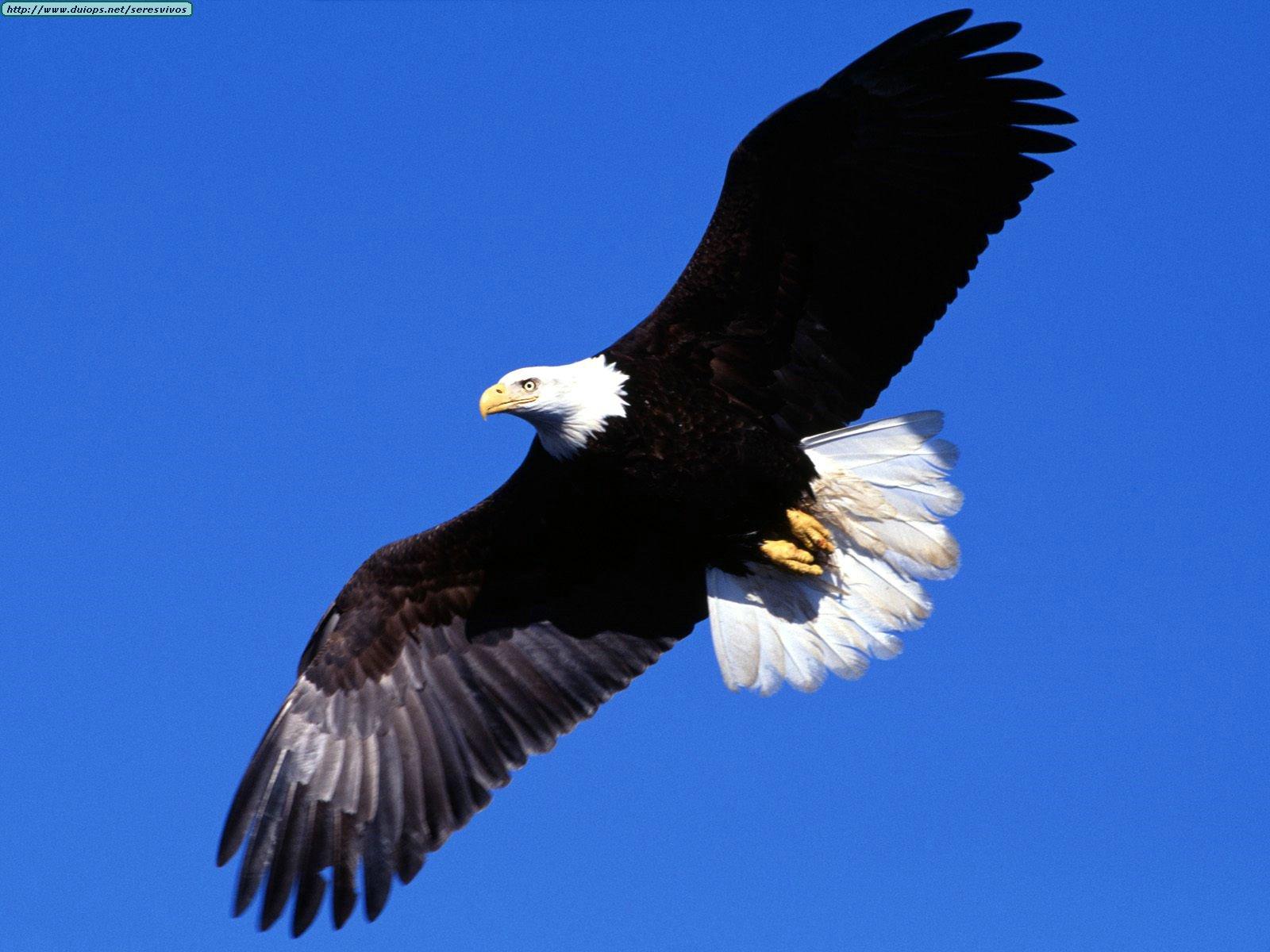 Mensajes para Meditar: El Proceso de el Aguila