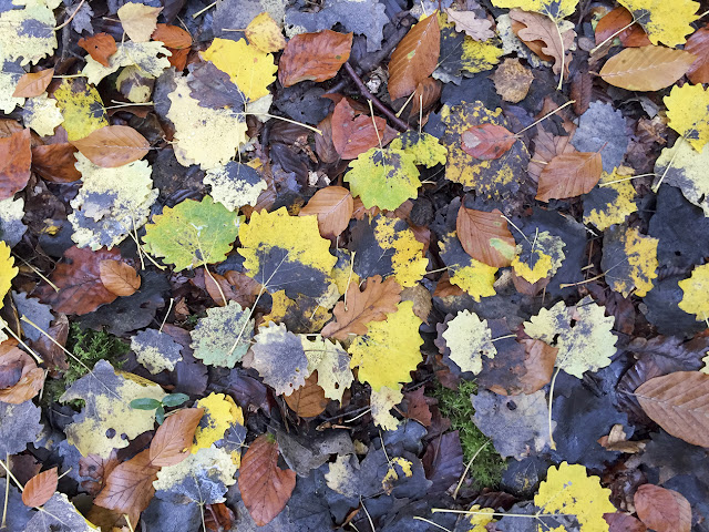 Aspen leaves on the ground on Hayes Common, 27 October 2015.
