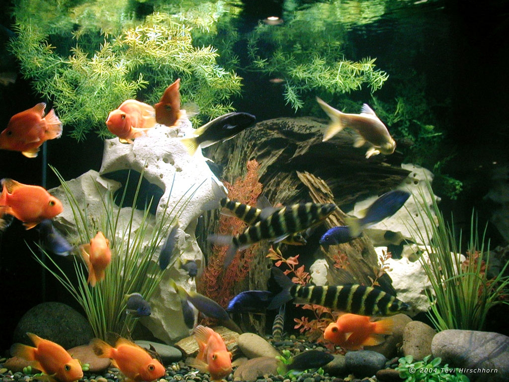 I love all animals how to choose your first fish for for First fish tank