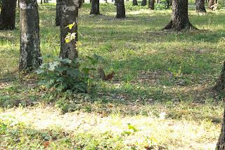 тула, центральный парк, белочки в туле, парк белоусова в туле, цветы, клумбы, белочки