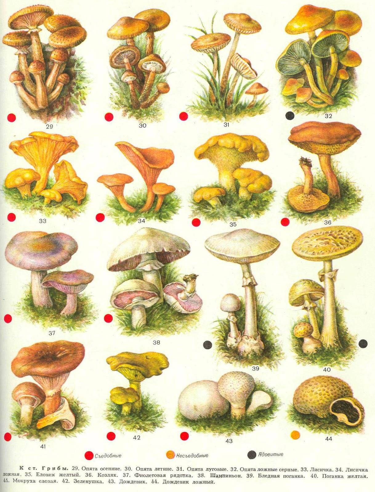 Картинки грибов для детей нарисованные цветные - 6716