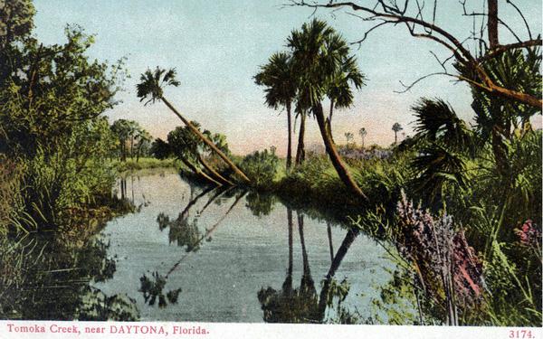 Tomoka Basin Post Card image- vintage
