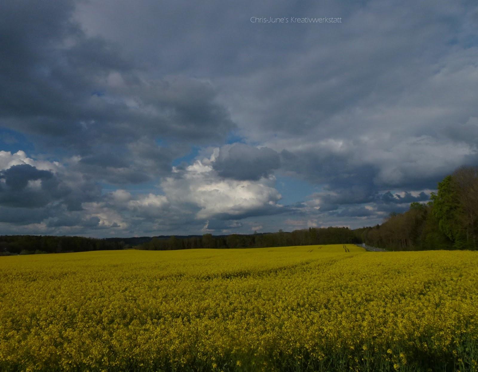 Rapsfeld mit Wolkenhimmel