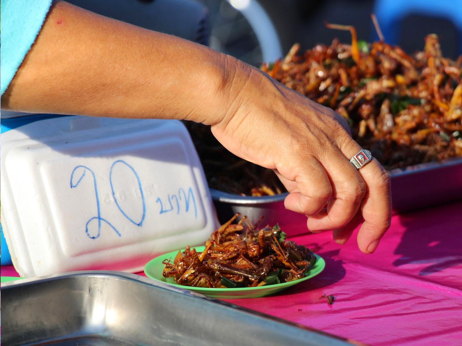 insecte thaïlande