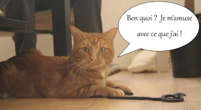 Chat roux de l'école du chat libre de toulouse et une ficelle.