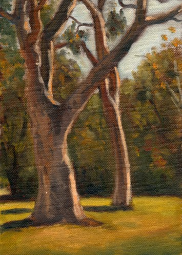 Oil painting of two lemon-scented gums in bright mid-afternoon sunlight.