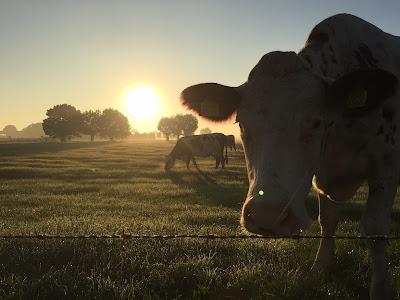 Overnachten Zelhem Pieterpad bed & breakfast, B&B in de Achterhoek, herfst sfeer, ochtendgloren