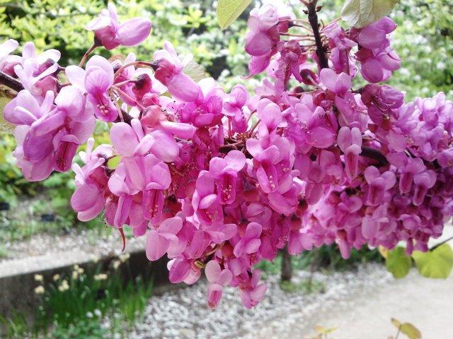Un jard n en la sierra de madrid visita al jard n for Arboles del jardin botanico