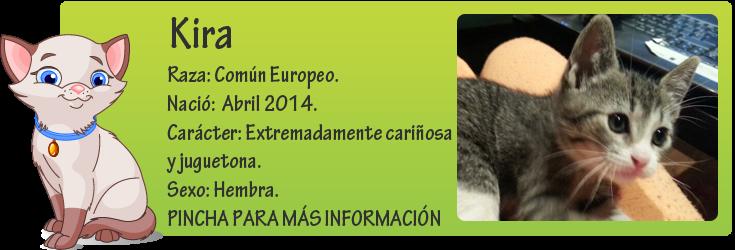 http://mirada-animal-toledo.blogspot.com.es/2014/06/kira-gatita-en-edopcion.html