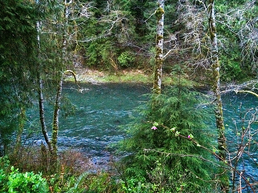 View of the Sol Duc river from the deck of our cozy river house, Forks, WA