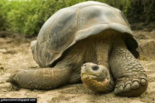 Pulau Galapagos Pulau di Hujung Dunia Yang Terdapat Haiwan Purba
