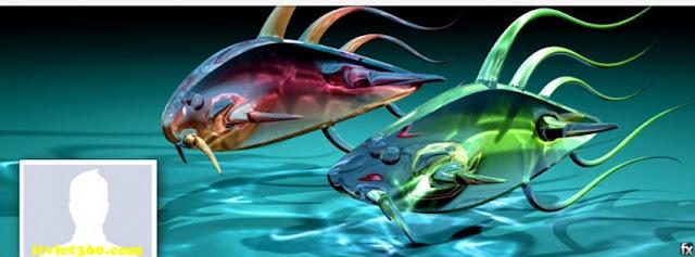 Ảnh bìa facebook 3D đẹp độc đáo - Cover FB timeline nice, 2 con cá đôi cá