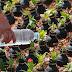 Flori plantate in grenade