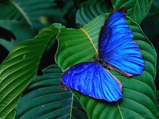 tropics butterfly (20)