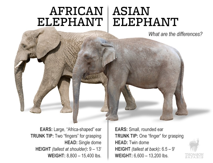 Weight of an asian elephant
