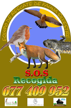 Equipo de rescate de fauna silvestre