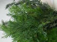 свежей зеленью укропа и петрушки