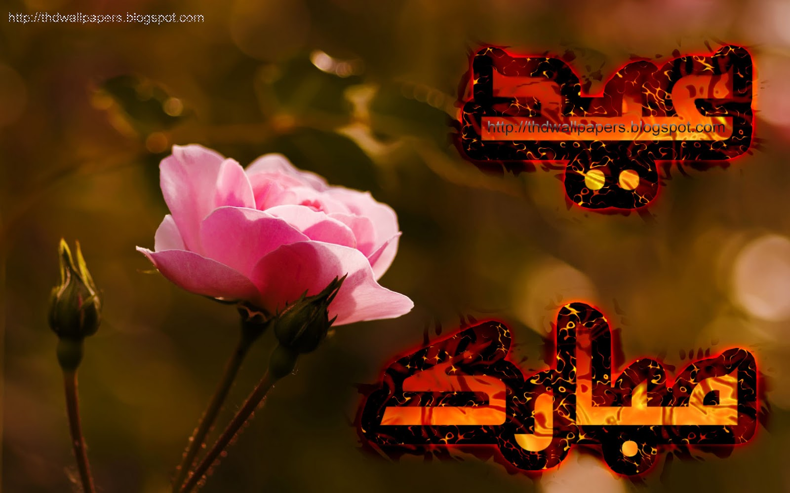 Rose Flowers Eid Mubarak Cards Urdu Text Hd Wallpapers