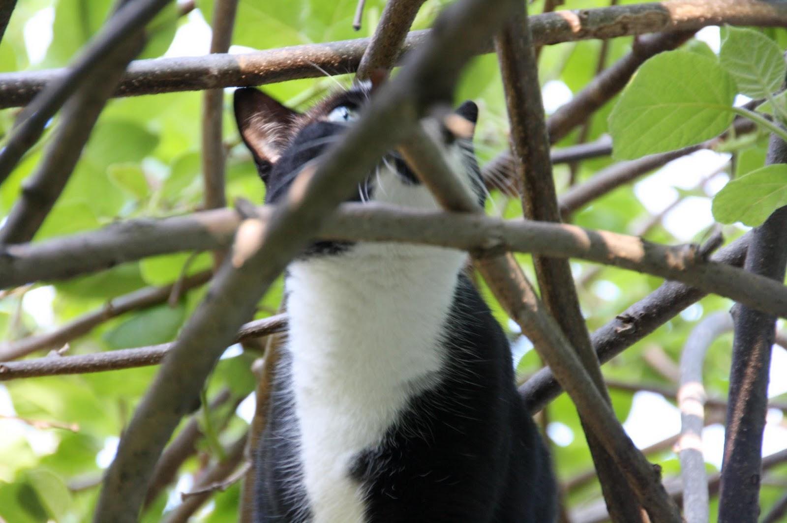 Die kiwi mit der kamera begleitet von mai bis dezember - Gartenhaus kiwi ...