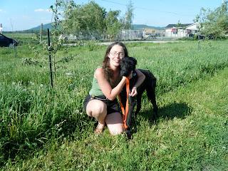toilettage rive-sud montérégie grooming south shore chien age dog older pension garderie