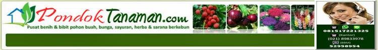 Jual Bibit Pohon